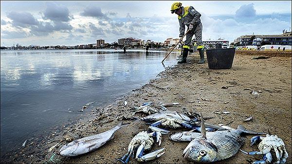 Salvar el Mar Menor